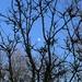 ....Moon arising...