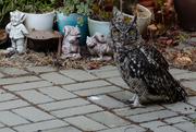 16th Jan 2019 - Spottie in the Garden