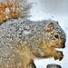 Snowy Fur