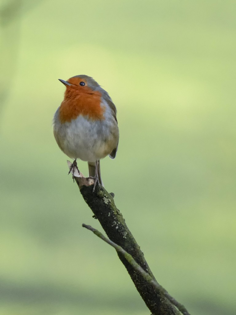 Curious Robin. by gamelee
