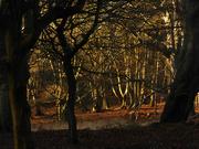 17th Jan 2019 - winter woods