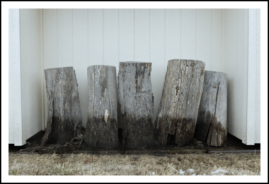 Five stumps all in a row by mcsiegle
