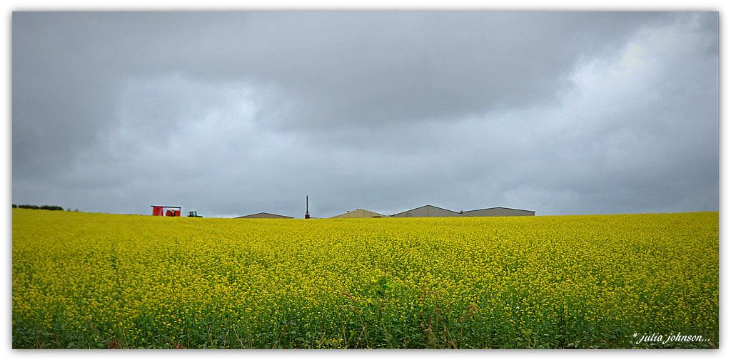 Mustard Fields... by julzmaioro