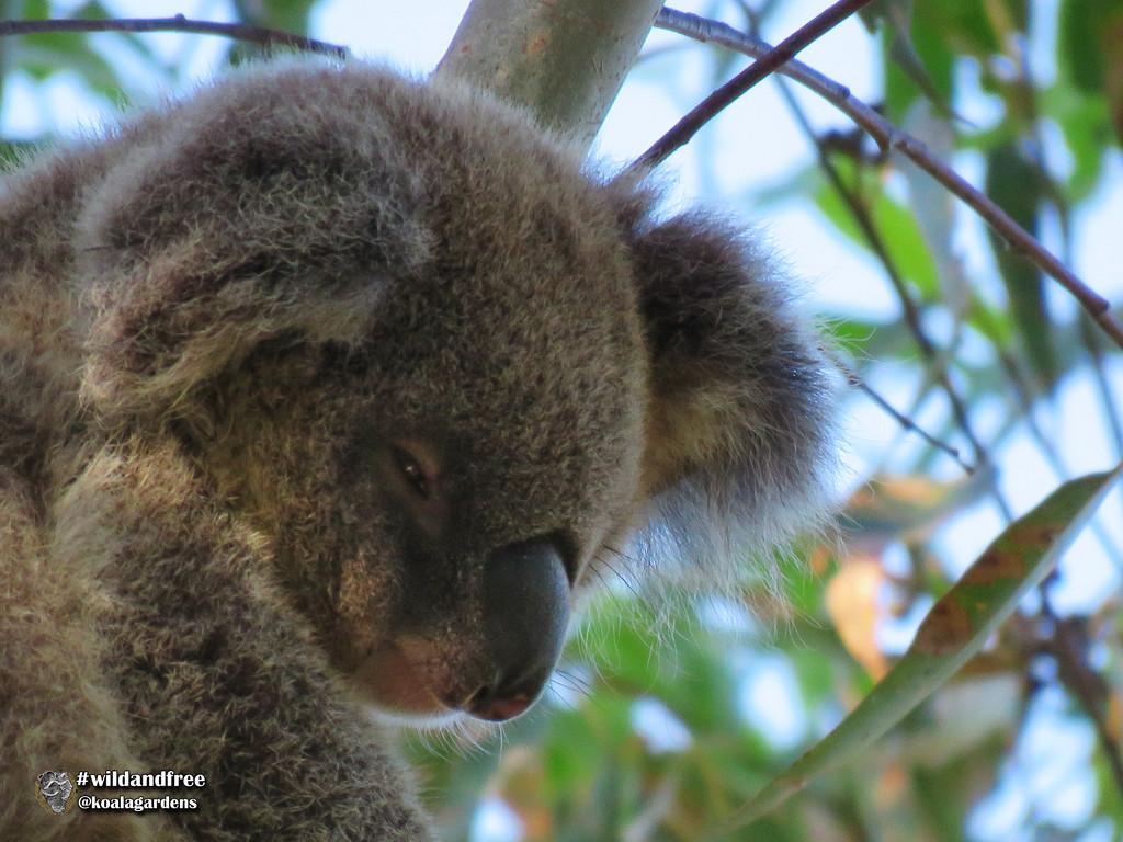 summer dreams by koalagardens