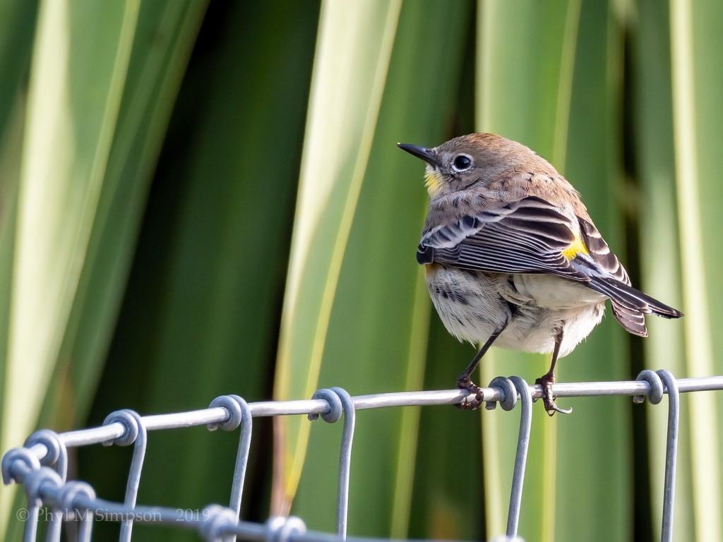 Sparrow by elatedpixie