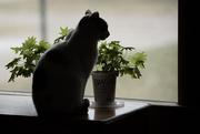 17th Jan 2019 - cat in the window