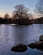 17th Jan 2019 - Falmer Pond II