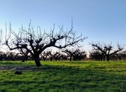 16th Jan 2019 - Orchard