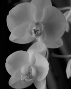 17th Jan 2019 - January 17: Orchid