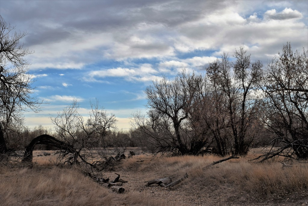 Dry creek bed by sandlily