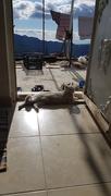18th Jan 2019 - Door Cat