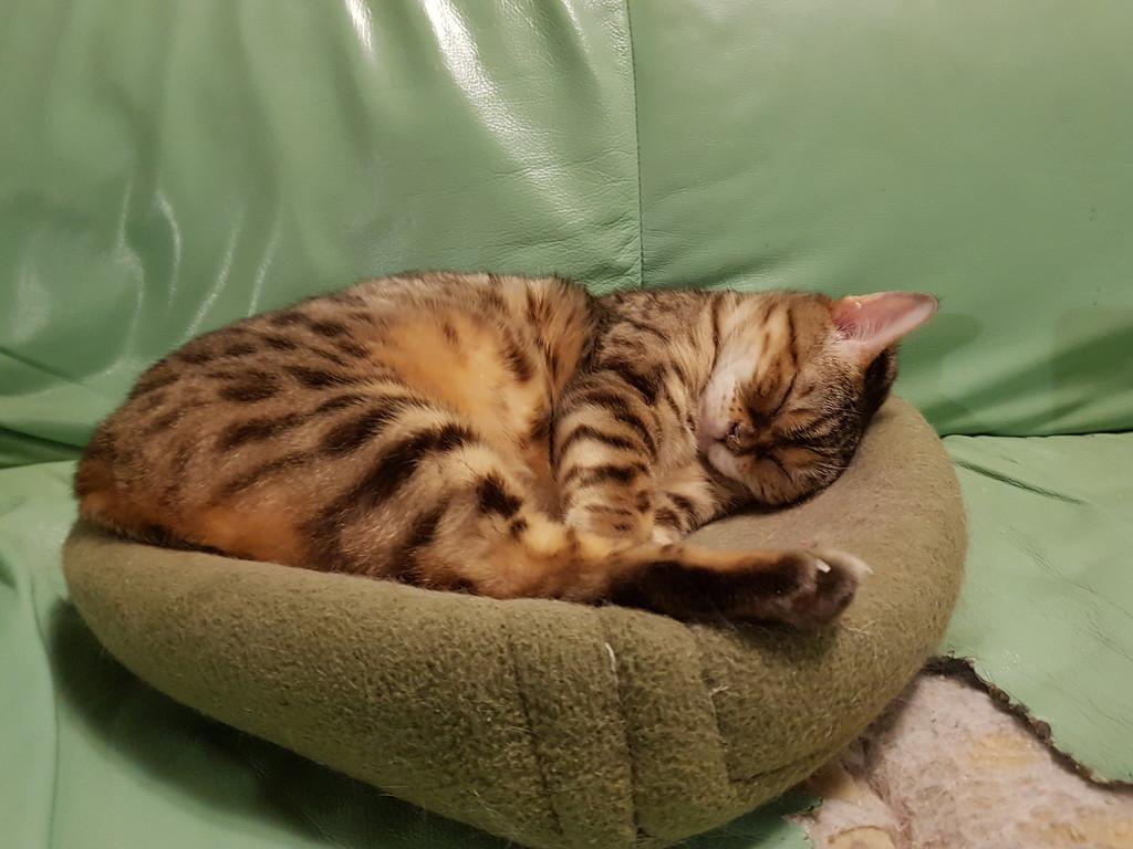 Sleepy Saga by katriak