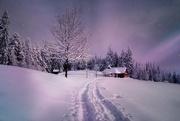 18th Jan 2019 - 2019-01-18 enchanted winter wonderland