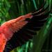 Flamingo Friday '19 03