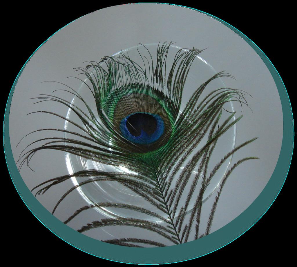 peacock feather by gijsje