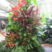 One of 2 giant floral arrangements using a variety of Ginger & Heleconia flowers