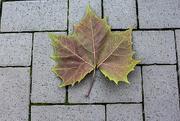16th Jan 2019 - Leaf on the Sidewalk