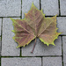 Leaf on the Sidewalk