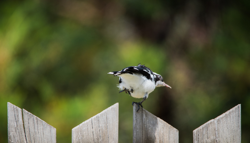 Pee-Wee Bird pilates by gigiflower