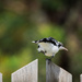 Pee-Wee Bird pilates