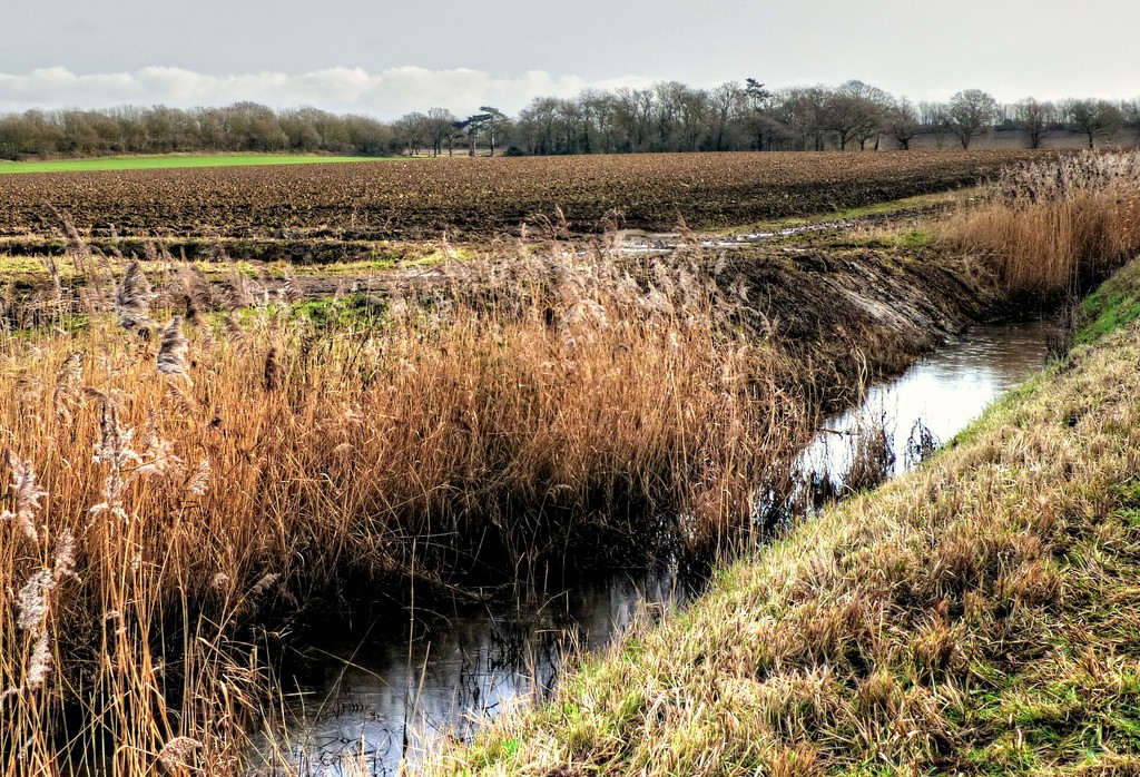 Walking to Trimley Marshes by judithdeacon