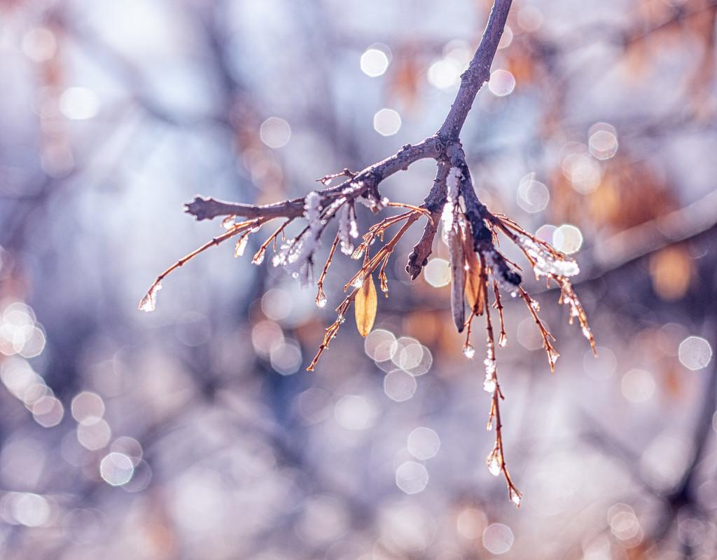 winter leaf by aecasey