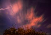 19th Jan 2019 - Plum Tree Orion & Night Clouds