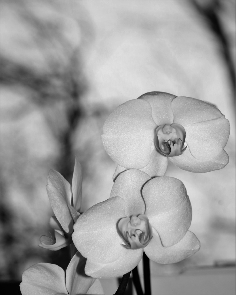 January 19: Orchids by daisymiller