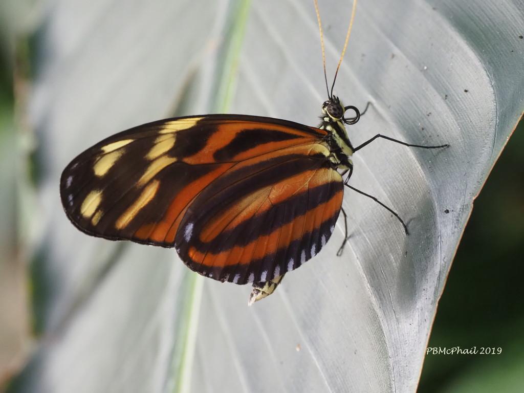 Butterfly 4 by selkie