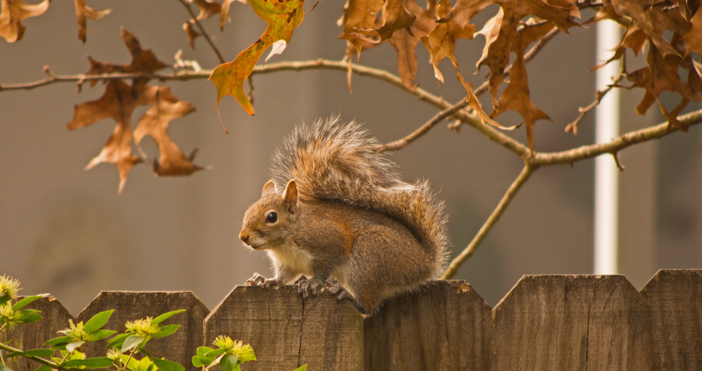 Mr Squirrel, Keeping and Eye on the Feeder! by rickster549