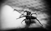 20th Jan 2019 - Along came a spider...