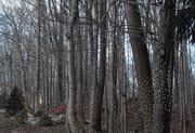 20th Jan 2019 - Festive trees