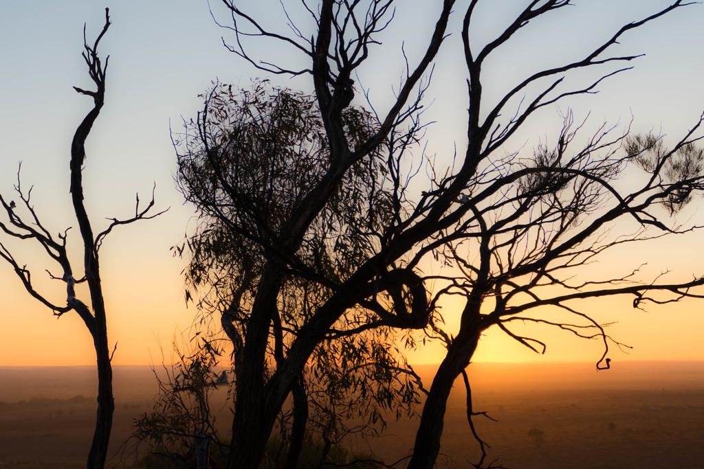 dawn by hrs