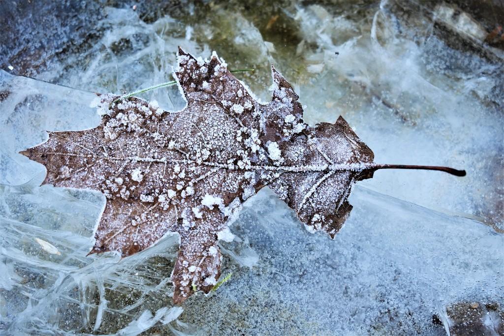 Winter II by madeinnl