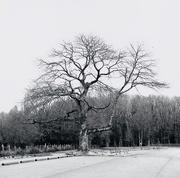 20th Jan 2019 - Tree, January 2019