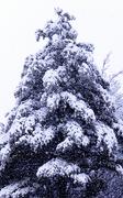 20th Jan 2019 - Snow Day