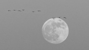 20th Jan 2019 - Fly me to the Moon