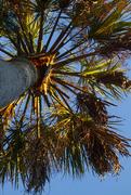20th Jan 2019 - Golden Hour Palm