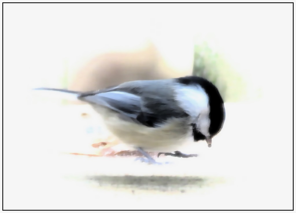 Watercolor Chickadee by olivetreeann