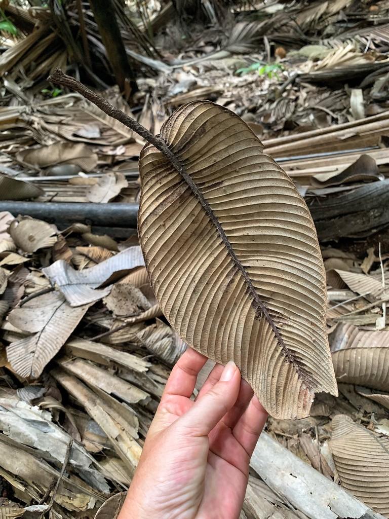 Dried leaf.  by cocobella