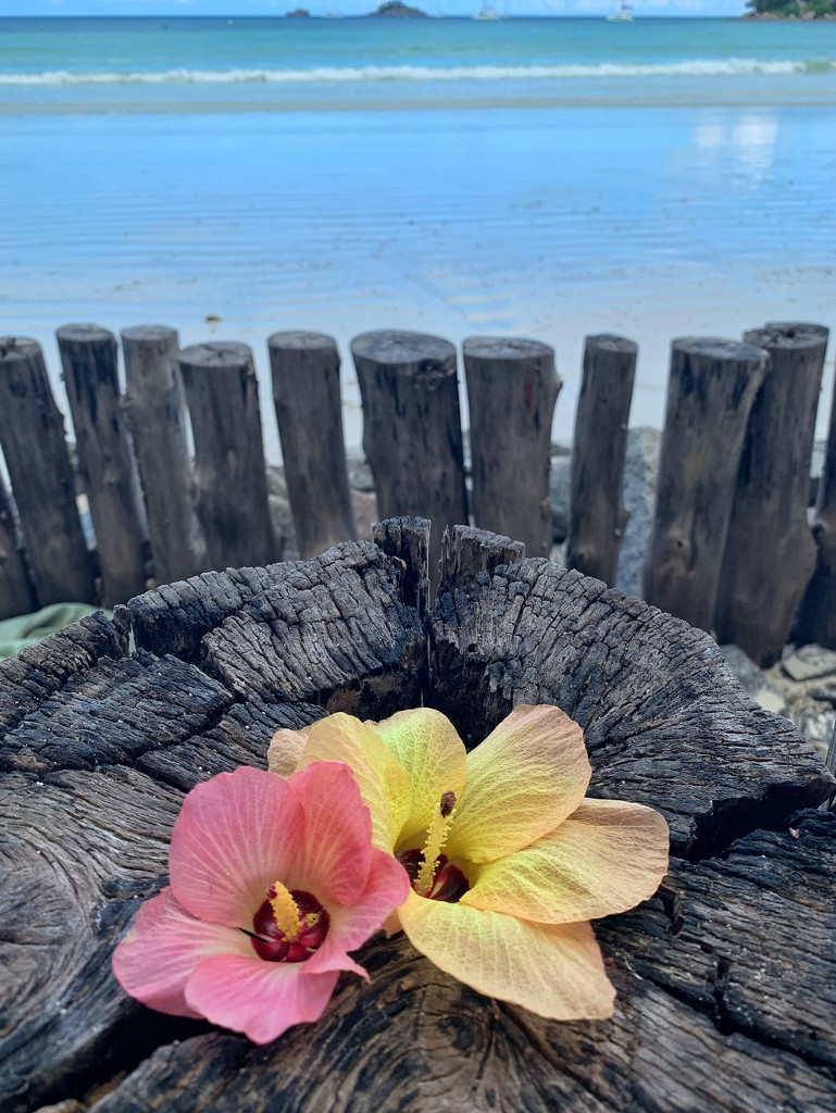Two flowers behind the ocean.  by cocobella