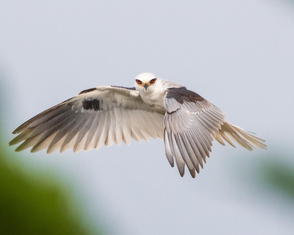 Kite with razor eyes by nicoleweg