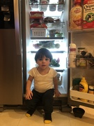 17th Jan 2019 - Fridge sitter