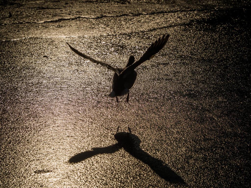 Take off by haskar