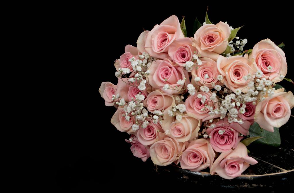 Grad Roses  by gq