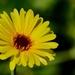 A Little Bit Of Sunshine _DSC4459
