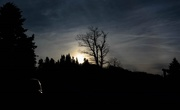 21st Jan 2019 - Tree silhouettes