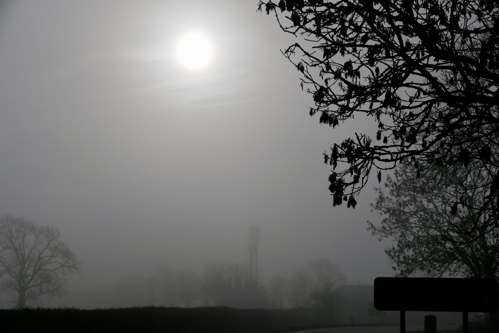 Cold & Misty Morning  by carole_sandford