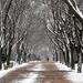 Winter walk in the Park by kork