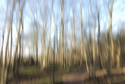 21st Jan 2019 - More from the woodland